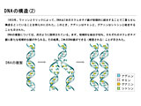 DNAの構造(2)のサムネイル