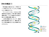 DNAの構造(1)のサムネイル